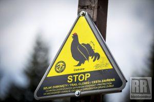 Ochrona cietrzewi i sokołów wędrownych. Zamknięte szlaki w Karkonoszach