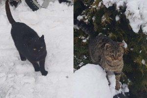 Poszukiwani właściciele kotów
