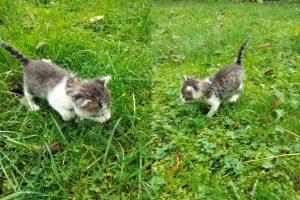 Maluszek szuka kochającego domu